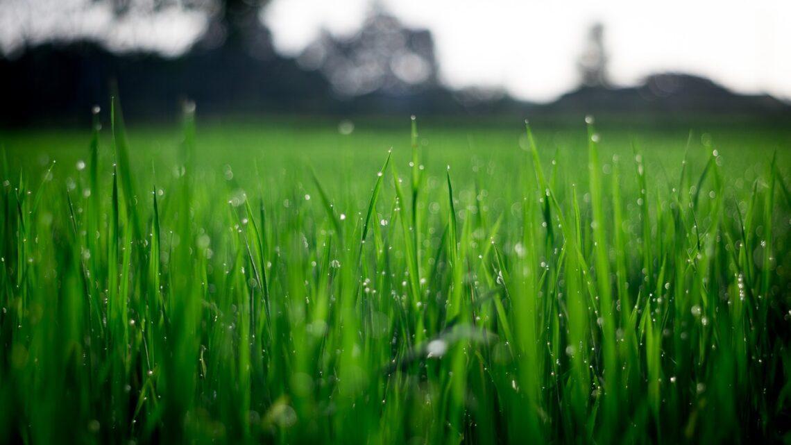 Halten Sie Ihren Rasen unkrautfrei