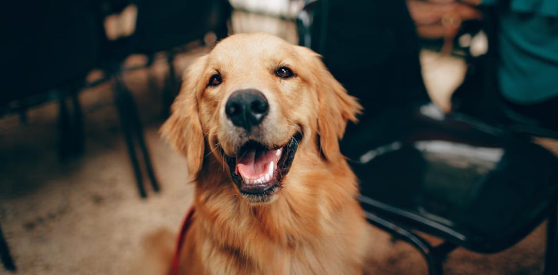 Eine Leishamniose Hund vom Facharzt heilen lassen