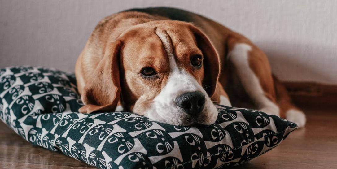 Hundekissen: Der Trick ist die Füllung